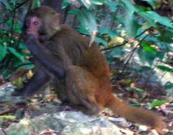 Photo of a monkey